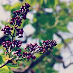 10 Easy Ways to Keep Your Garden Gorgeous